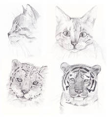 Pencil Cats by Clairey-kun