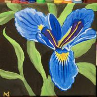 louisiana iris by yabbles