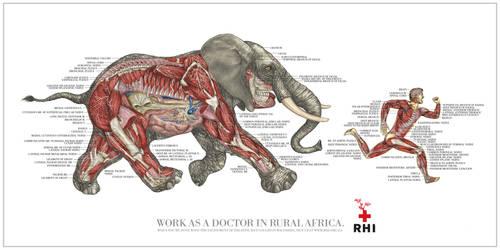 RHI Anatomy1 by PeubloShatner
