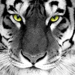 Joe1313's Profile Picture