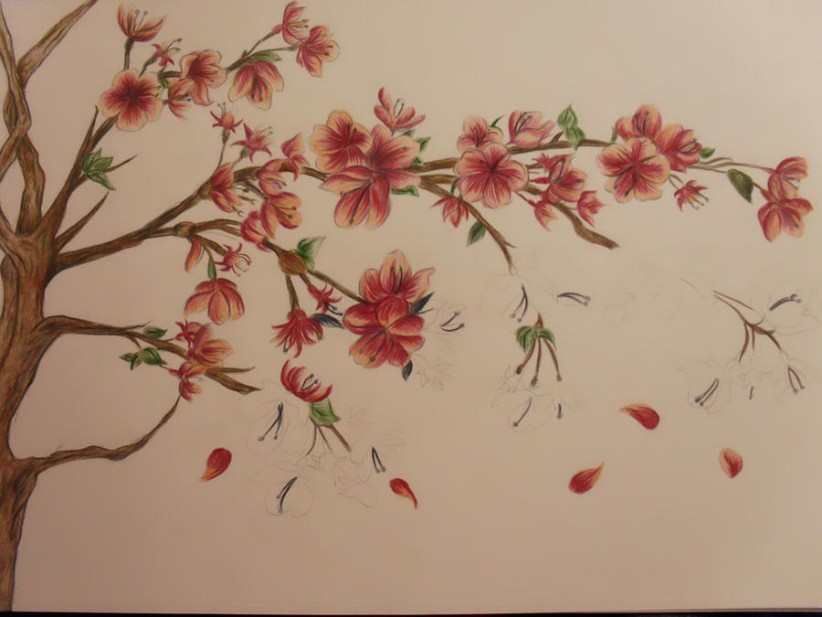 How To Draw A Cherry Blossom Tree In Pencil Cherry blossom tree wip by