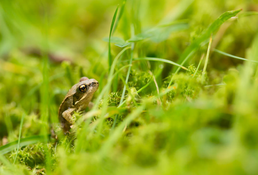 Tiny lil frog in a big mossy world by Hansve