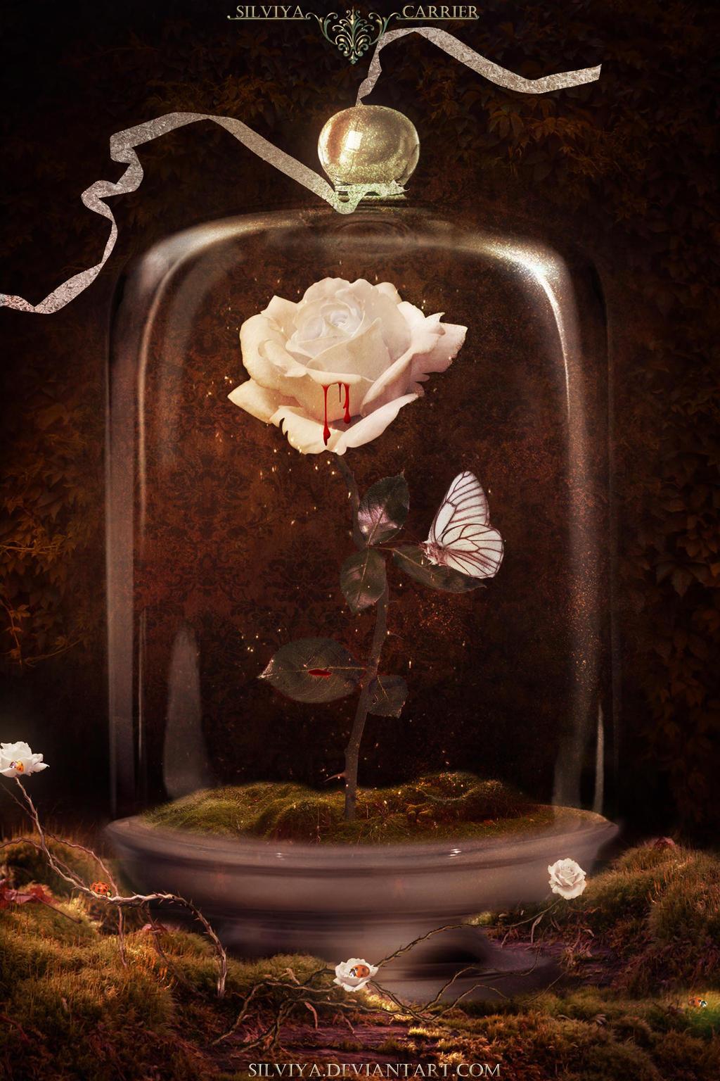 Bleeding Rose by silviya