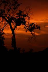 Killer sunset I