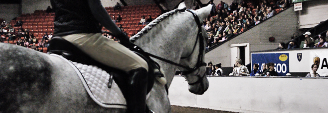 Horse stock 06 by Blissfully-Blind