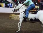 Horse stock 07