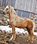 Horse Stock 38