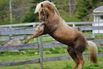 Horse Stock 51