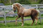 Horse Stock 53