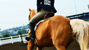 Horse Stock 60