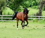 Horse Stock 67