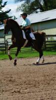 Horse Stock 69