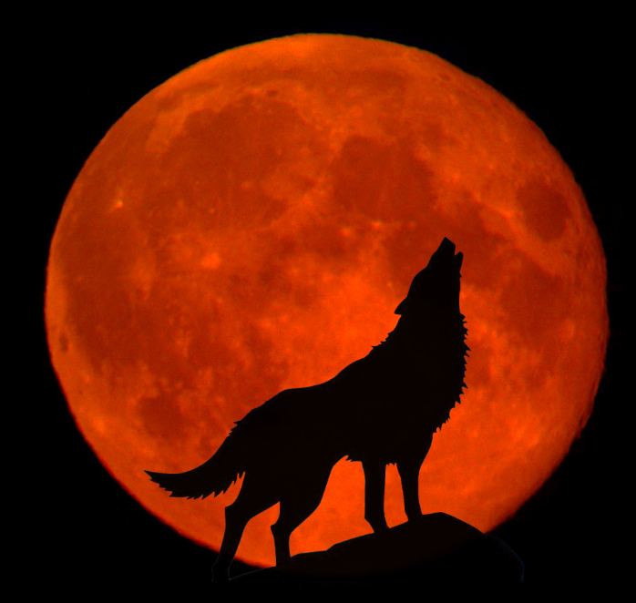 a howl at the red moon by rosannawolf on deviantart