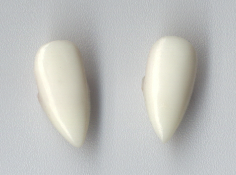 Individual Fangs