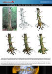 tree process