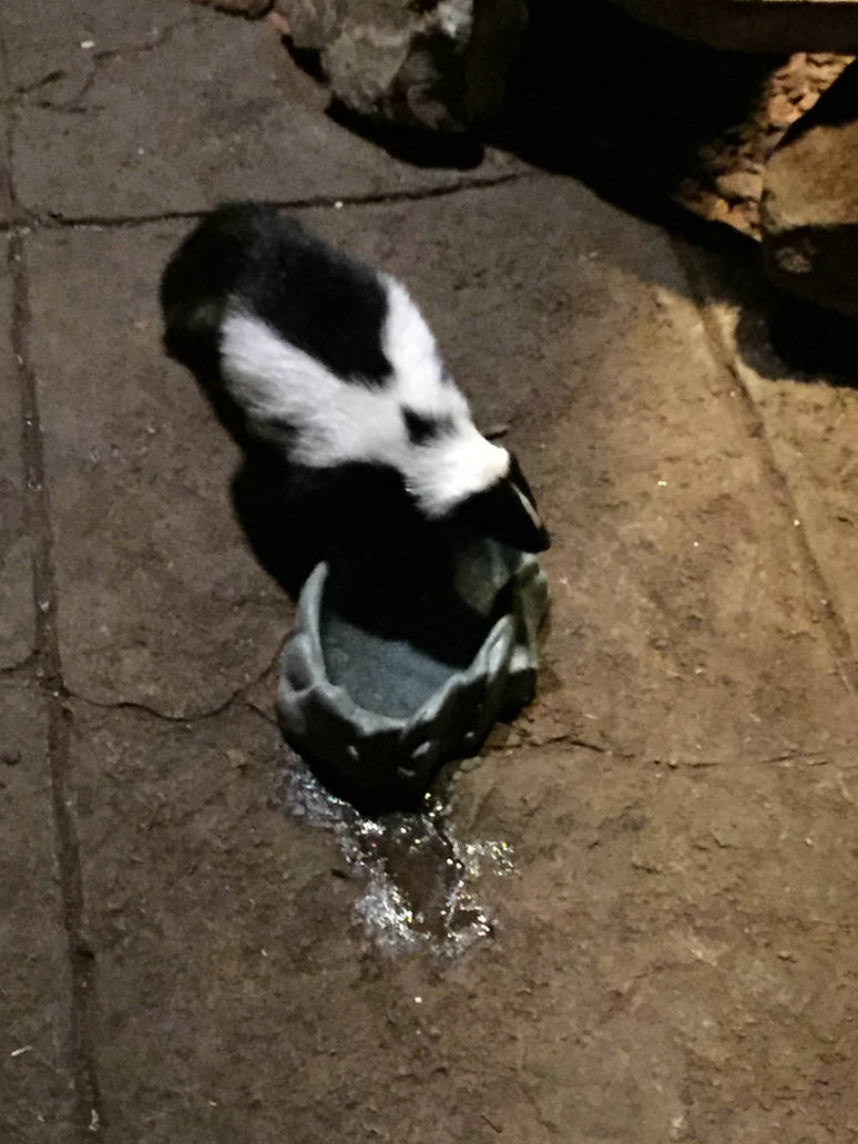 Cute Skunk By Mrpoeandyogul On Deviantart