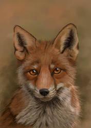 The Fox by Sarahharas07