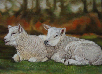 Lambs by Sarahharas07