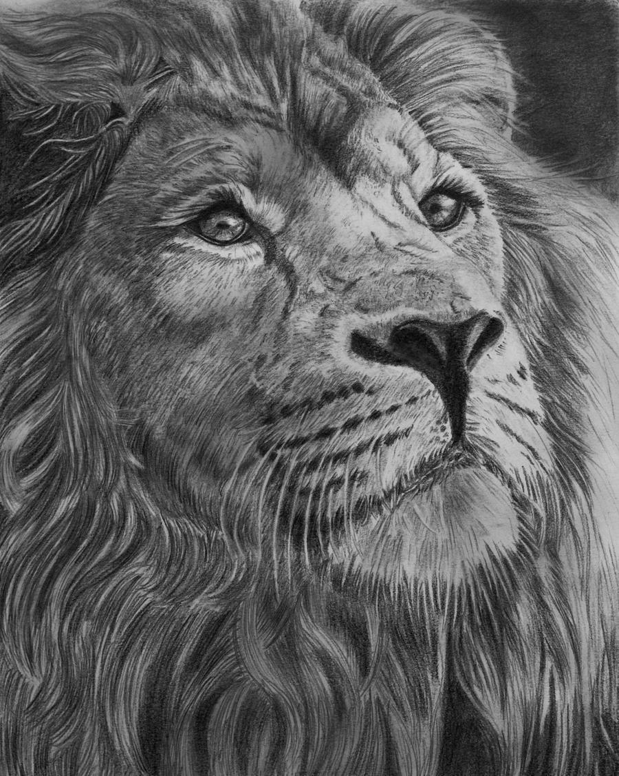 Majesty, graphite pencil