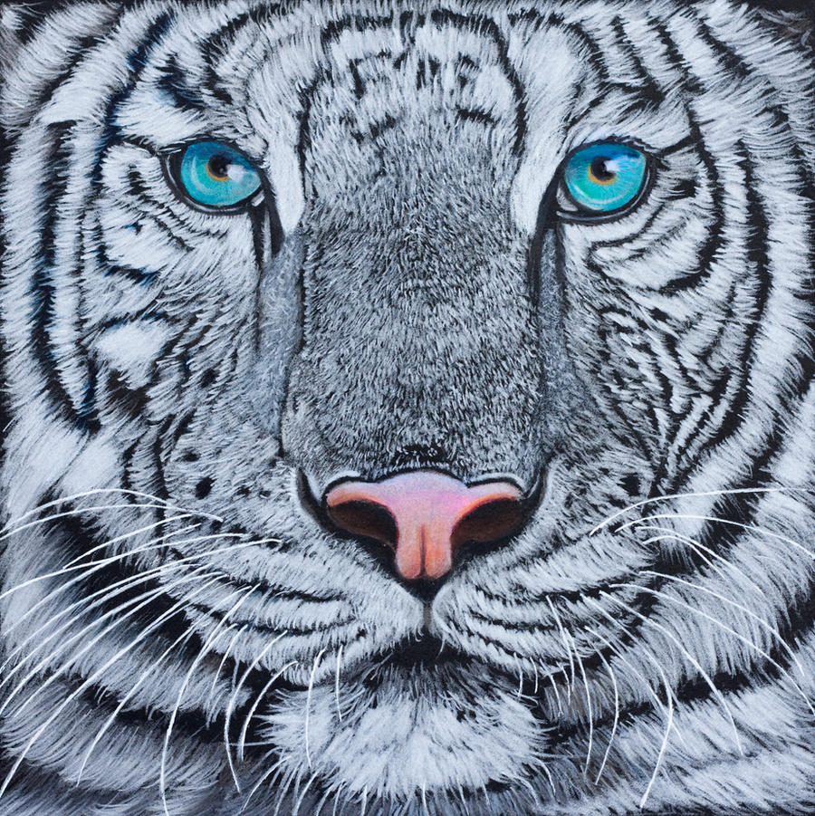 White tiger, coloured pencil by Sarahharas07