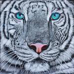 White tiger, coloured pencil