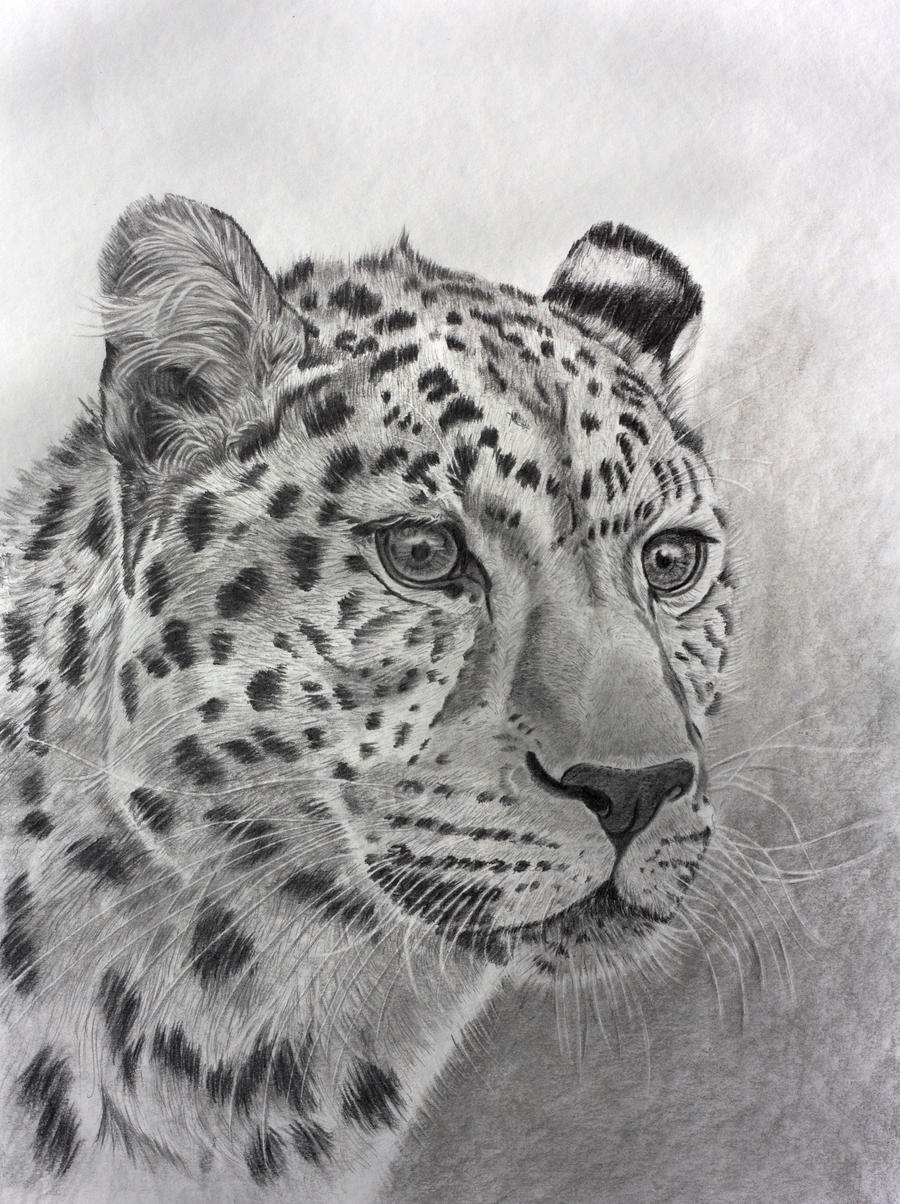 Leopard Pencil Drawings Leopard in graphite by...