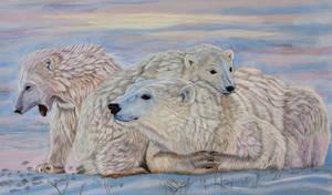 Polar Pastels by Sarahharas07