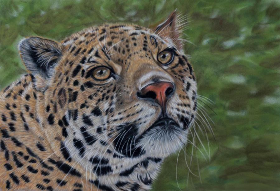 Jaguar pastel by Sarahharas07