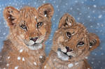 Snowy lions in pastel