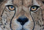 Cheetah pastels by Sarahharas07
