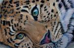 Leopard pastels