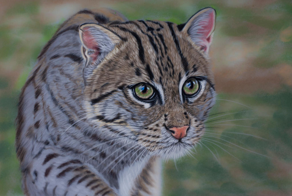 Fishing cat pastels by Sarahharas07