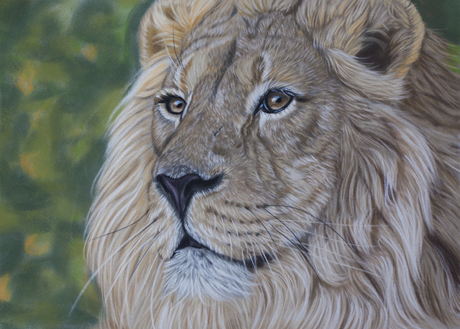 Asiatic lion by Sarahharas07