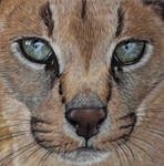 Caracal, soft pastels