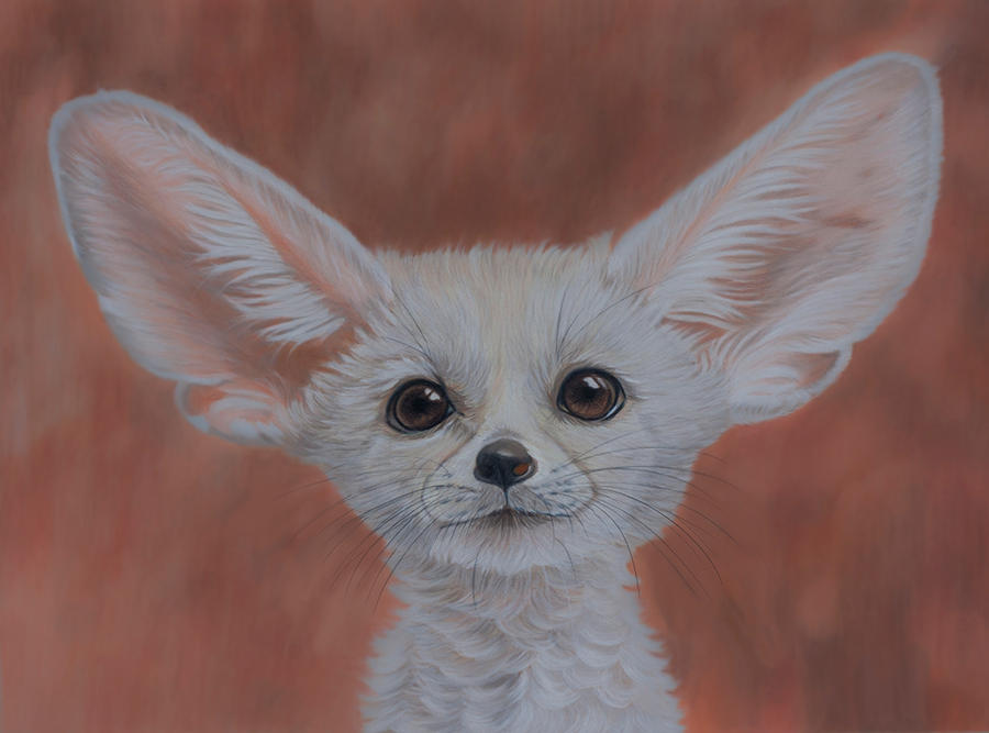 Realistic fennec fox drawing