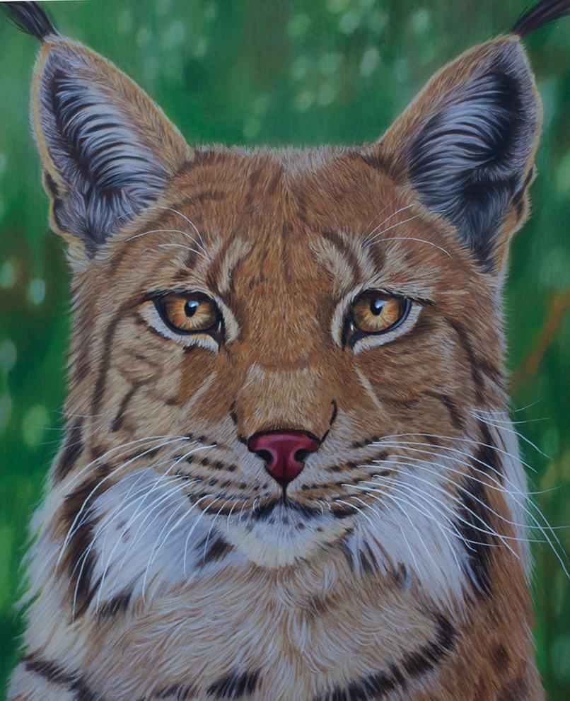 Eurasian Lynx by Sarahharas07