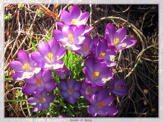 Heralds of Spring by Aranka