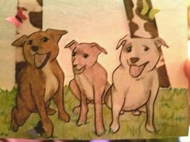 Teddy, Xena, Nico by kenlybop