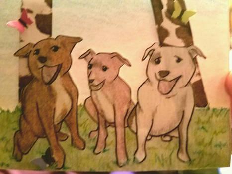 Teddy, Xena, Nico