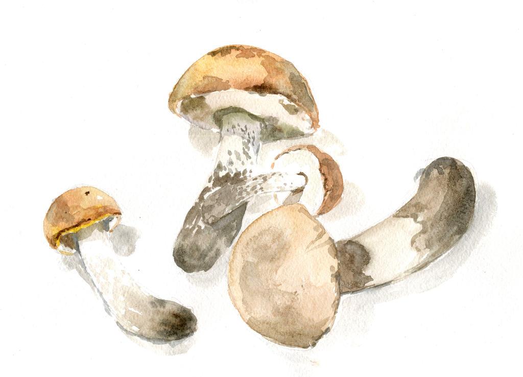 Mushrooms watercolor by MeiMei-KaiTen
