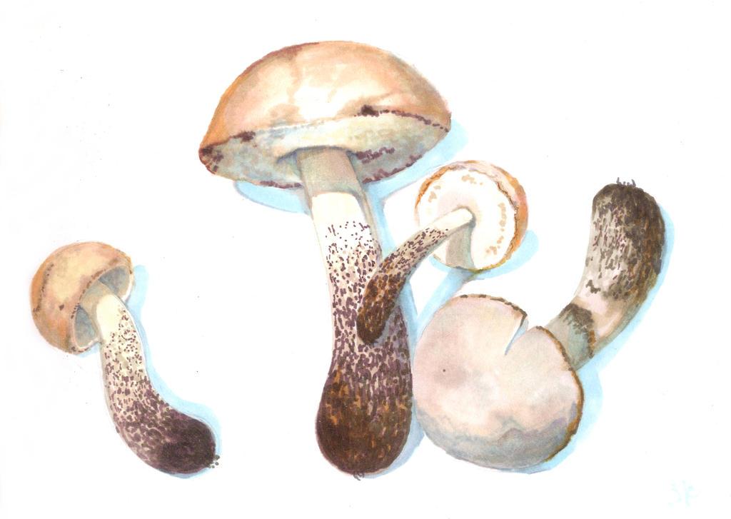 Mushrooms markers by MeiMei-KaiTen