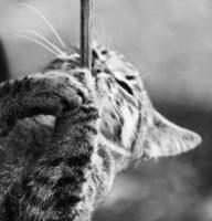 kitten II by CarolineZenker