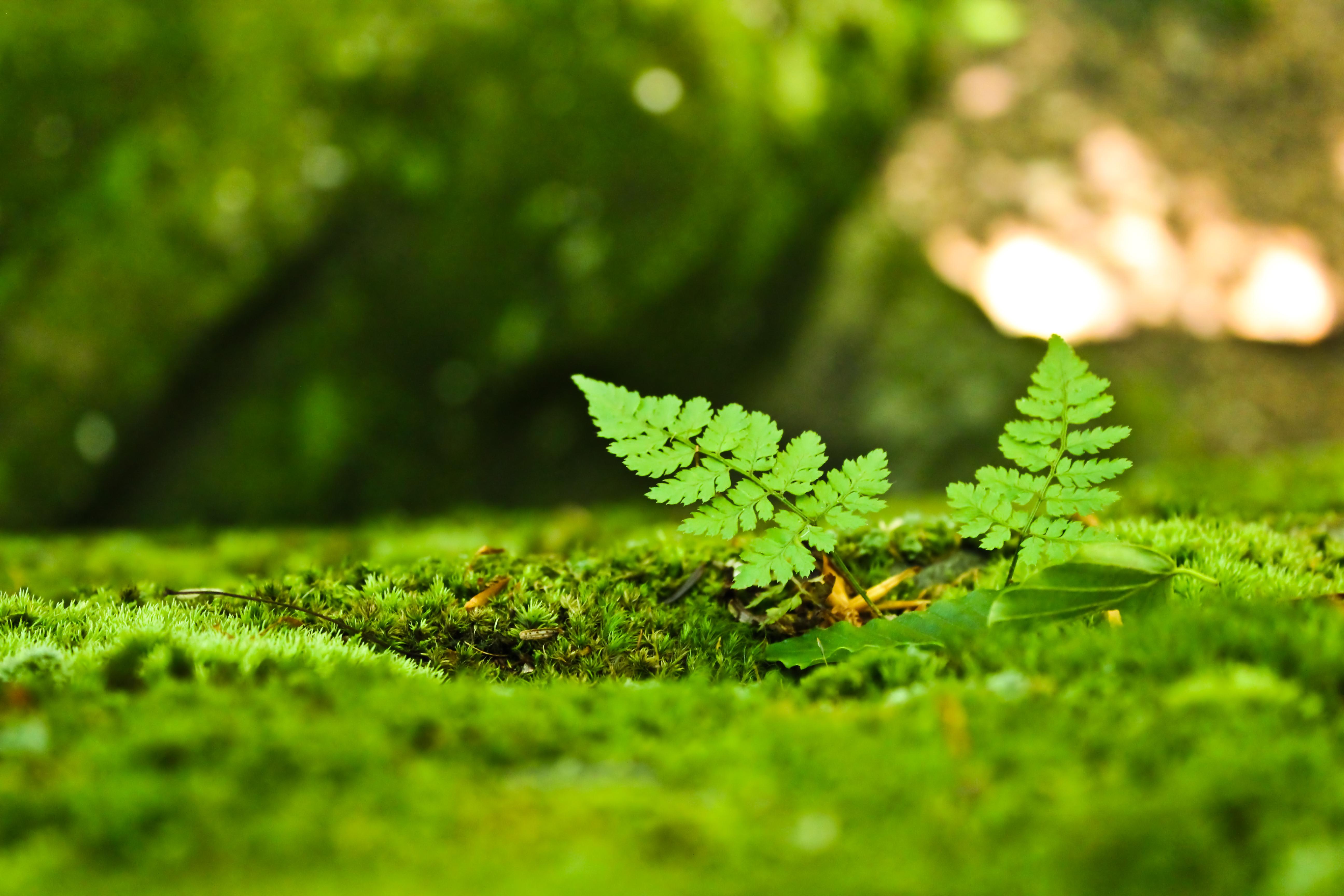 photo collection miniature ferns by wingzero354 binder clip artwork data binder clipart