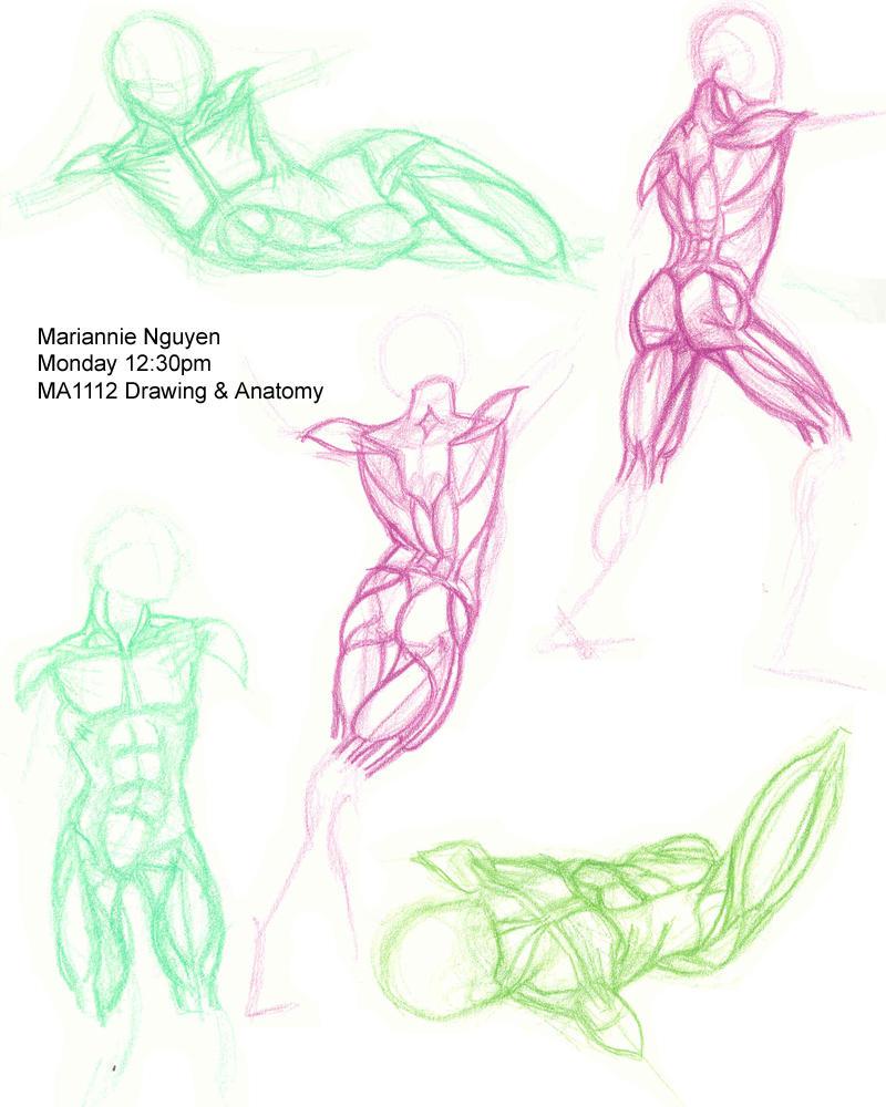 anatomy final by utenafangirl