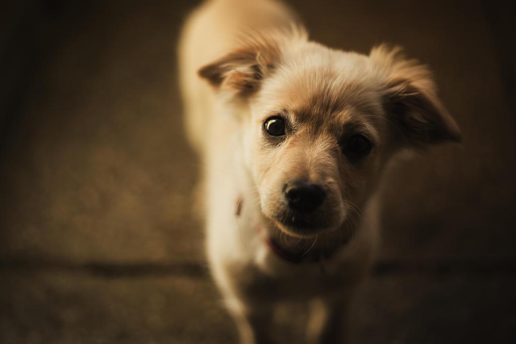 puppy by becekubiak