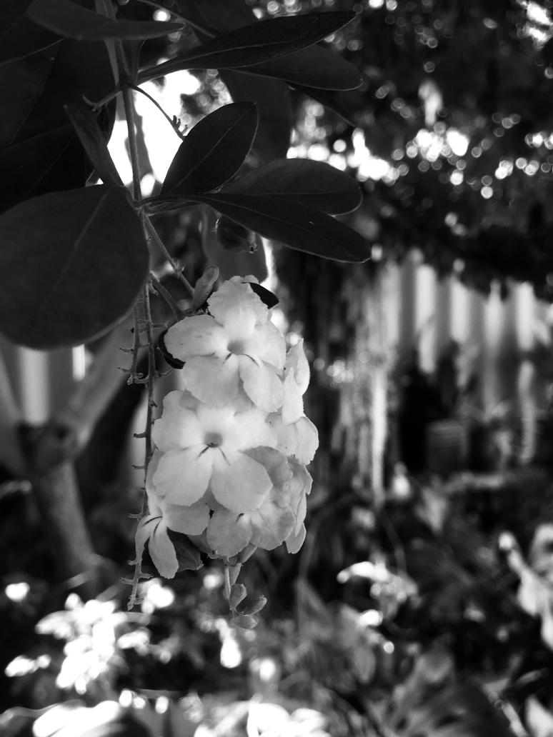 Flowers Black And White 2842018 By Saraeustace91 On Deviantart