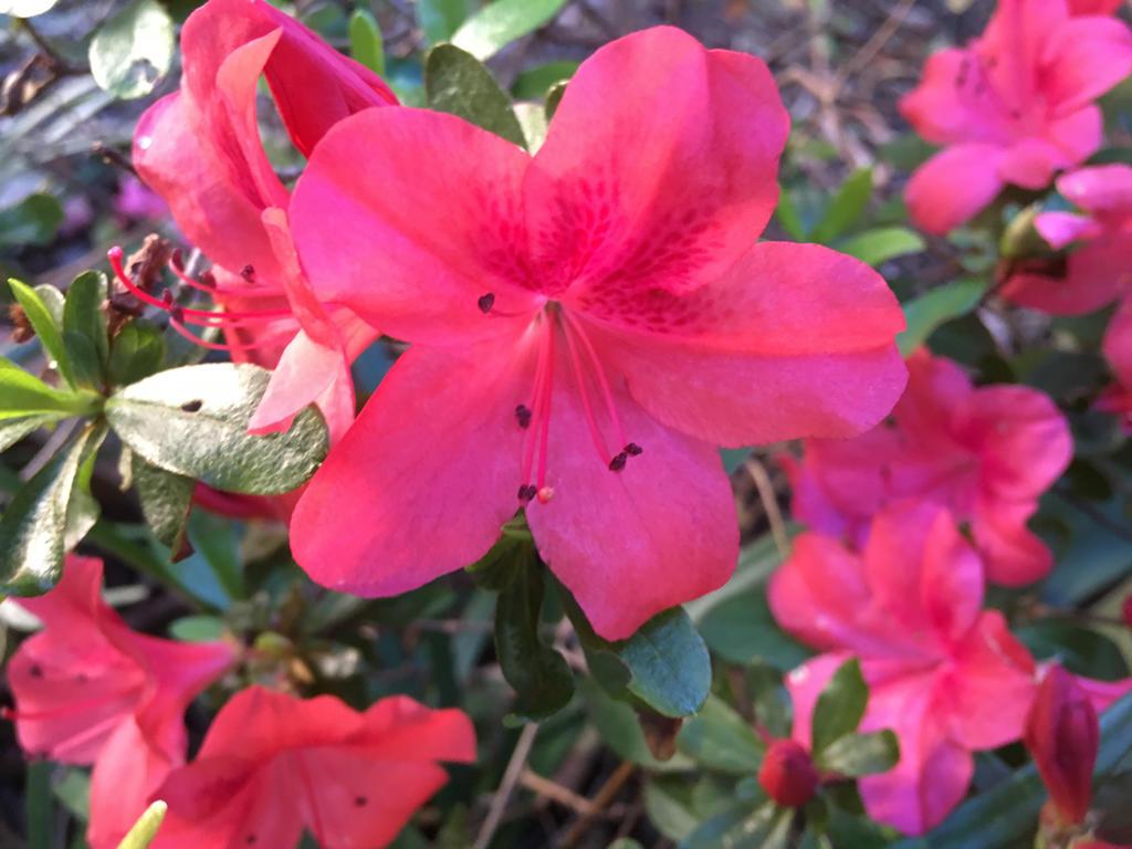 Pink flowers 1982018 by saraeustace91 on deviantart pink flowers 1982018 by saraeustace91 mightylinksfo