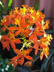 Orange flowers 22/03/2019 by Saraeustace91