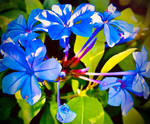 Blue flowers 1/8/2020