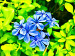 Blue flowers 6/9/2020